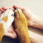 ペットのためのフロアコーティングは?